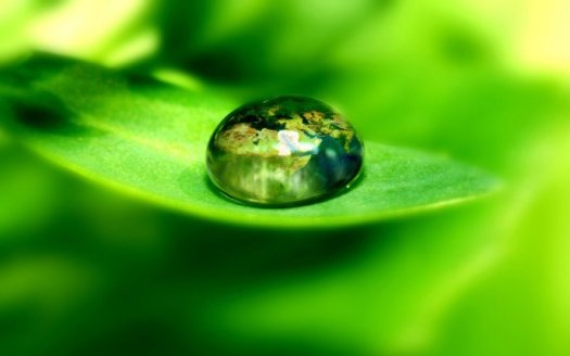 3544_the-world-in-a-drop-of-water-supported-by-a-leaf